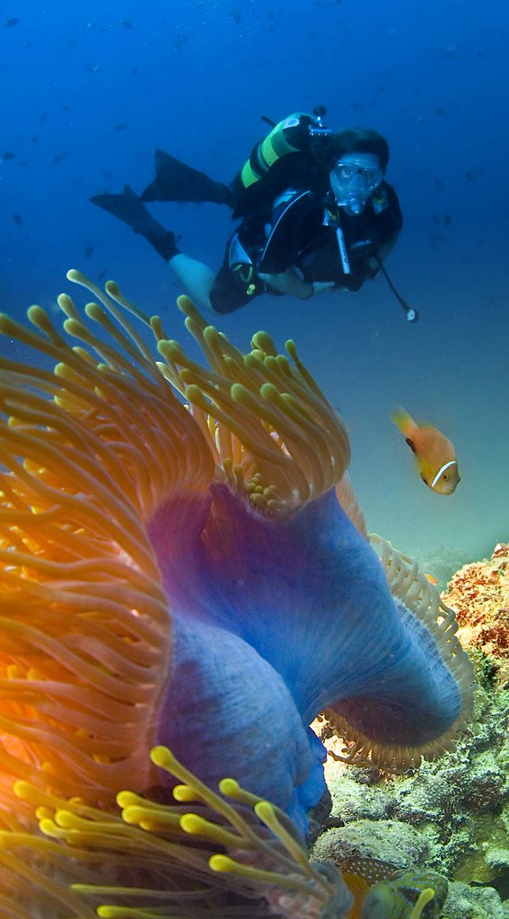 The 5 best places in the world to snorkel and scuba dive - Best place to dive the great barrier reef ...