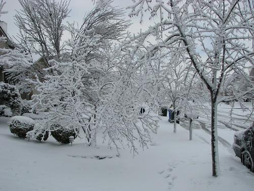 Ice Storm 2009 010