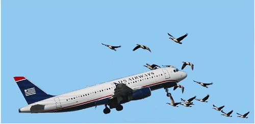 US Airways Violates Federal Migratory Bird Laws | by Mike Licht, NotionsCapital.com