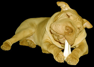 N Bone Puppy Teething Ring Dog Treat