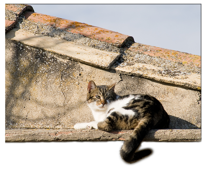 Gato en el tejado / Cat on the roof