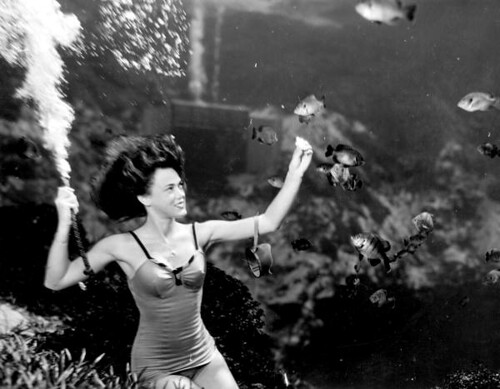 Frances Dwight feeding the fish as a part of the underwater show at Weeki Wachee Springs | by State Library and Archives of Florida
