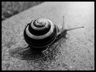 Heavy loaded snail | by blumblaum