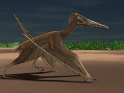 Pterosaur Reconstruction | by UCMP