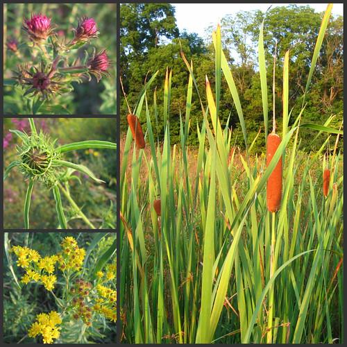 Indiana Native Plants: Native Indiana Prairie Planting