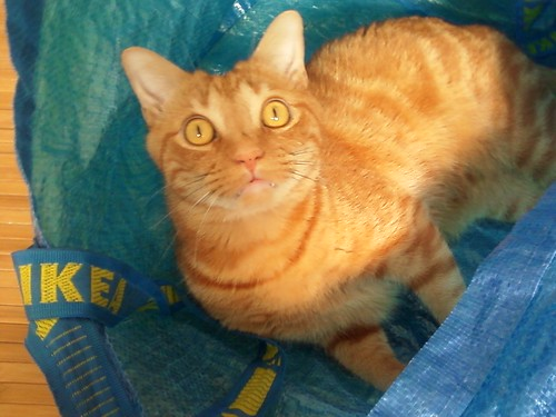 Stanley cat loves the Ikea bags | by claudinehellmuth