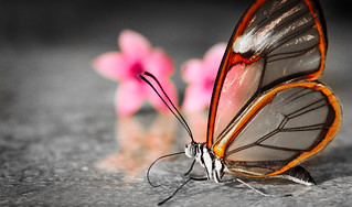 Transparent Butterfly | by thefost