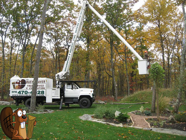 Busy Beaver Tree Service and Excavating | Flickr