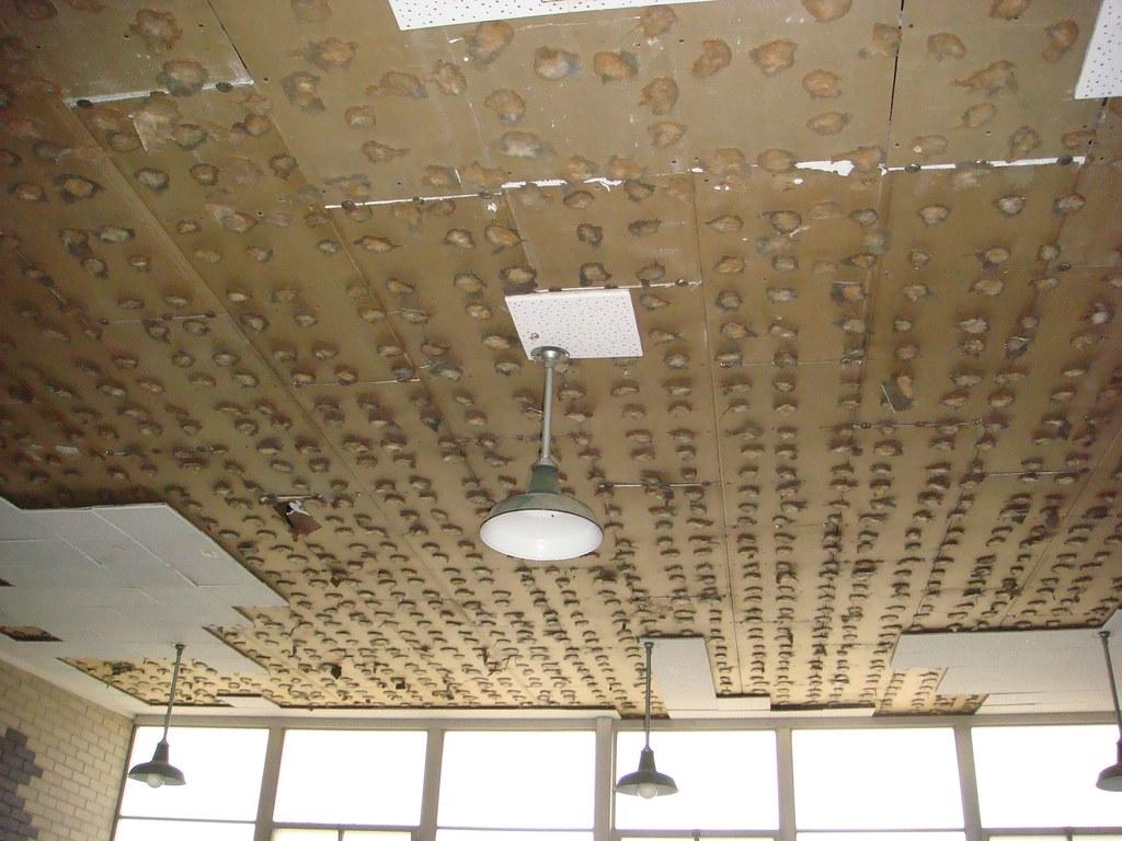 Asbestos ceiling tile adhesive excessive moisture build up flickr asbestos ceiling tile adhesive by asbestorama dailygadgetfo Gallery