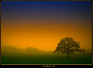 Niederhof - lonely tree | by NPPhotographie
