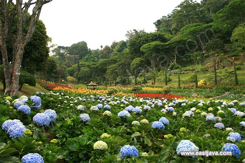 The Garden Flower In Selecta - Batu - East Java | The gorgeo… | Flickr
