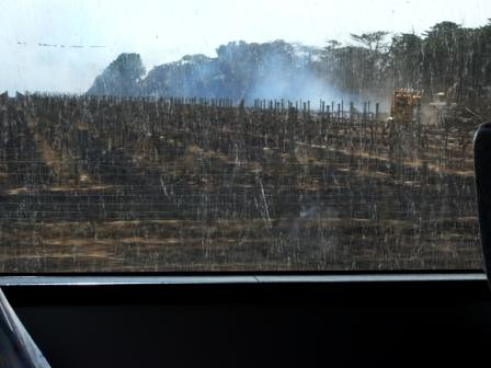punt road winery fires i took this picture through the. Black Bedroom Furniture Sets. Home Design Ideas