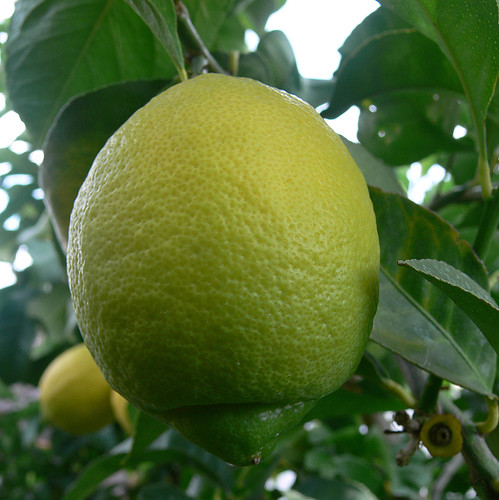 how to get rid of asian citrus psyllid