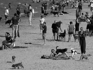 Montrose Beach Dog Park