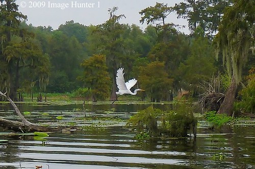 Great Egret Flying Over Lake Martin | by Image Hunter 1