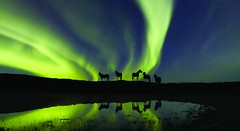 Northern Lights & Horses | by Discover the World