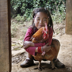 Hmong guardian Rooster | by NaPix -- (Time out)