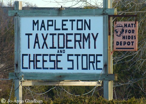 mapleton taxidermy and cheese store . . . yuck | by joghadban