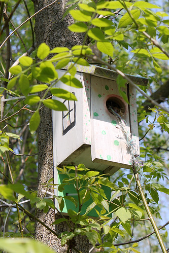 birdhouse | by Jenn Durfey