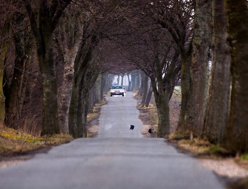 The road to Store Heddinge - IMG_2044a | by Alfs photodiary