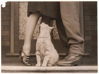Soldier's goodbye & Bobbie the cat, Sydney, ca. 1939-ca. 1945 / by Sam Hood | by State Library of New South Wales collection
