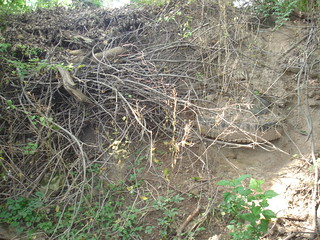 Trash & Yard Debris in Bread & Cheese Creek between Plainfield & Old North Point Road. | by Clean Bread and Cheese Creek