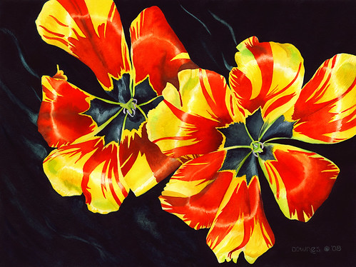 Flying Tulips | by susanjdownes