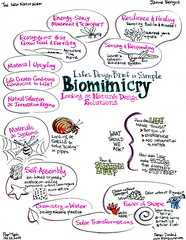 Biomimicry Innovation Inspired By Nature Ebook Free Download