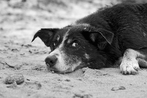 The Friendly Dog With His Stone, Vatersay | by www.bazpics.com