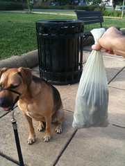 My Grant Circle Good Deed of the Day: Picking up a few pounds of dog poop | by Wayan Vota