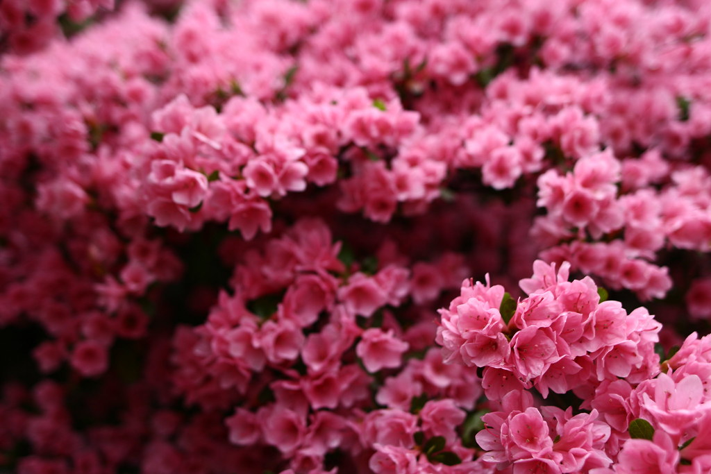 Wonderful spring pink flower bush spring flowers in bloom flickr wonderful spring pink flower bush by forestwander mightylinksfo