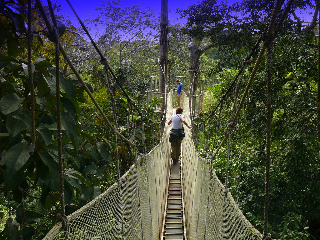 ... Canopy Walkway In The Amazon Rainforest (110 feet Up) | by Butch Osborne & Canopy Walkway In The Amazon Rainforest (110 feet Up) | Flickr