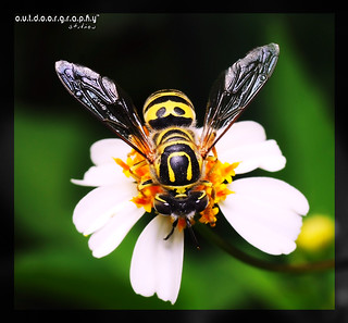 Outdoorgraphy™ : Tattooed Bug | by Sir Mart Outdoorgraphy™