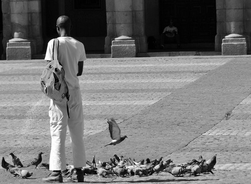 Feeding pigeons coming from the first world | by keltikee