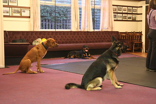 Dog Obedience Training Omaha
