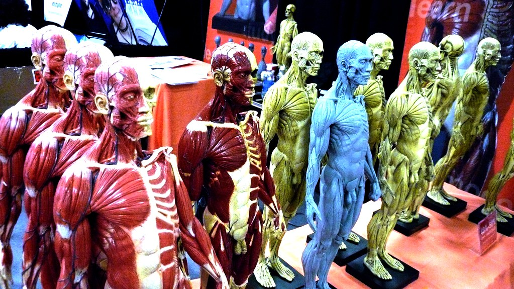 Anatomical Models Exhibition Hall Gdc Moscone Center S Flickr