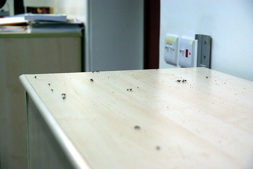 Ants from my AC | by Cedric Sam