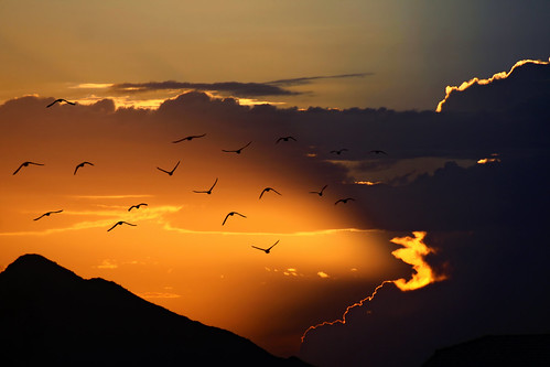 Sunset flight | by khosey1