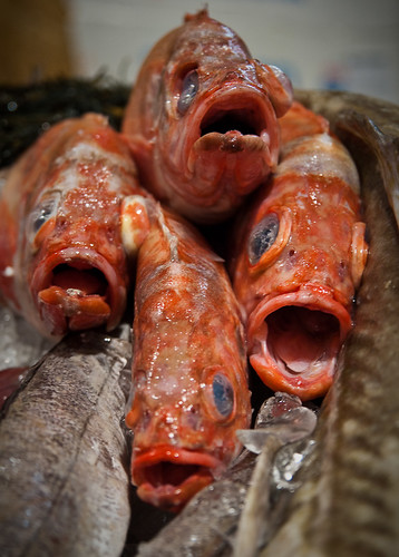 Fish quartet don 39 t worry be happy martin for Dont worry be happy fish