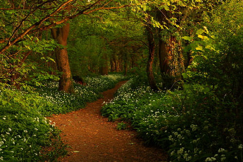 The Path to Fairytales (Wild Garlic Wood, Silverdale) | by sunstormphotography.com