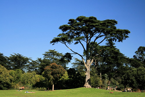 San Francisco Golden Gate Park Botanical Garden Pinuxette Flickr