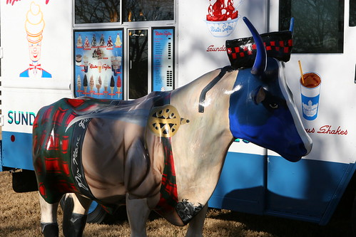 """Scottish"" Longhorn Hanging With Mister Softee Texas 