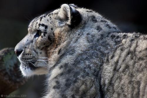 Snow Leopard Install Disk