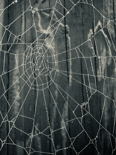 spider web with dew drops | by hlkljgk