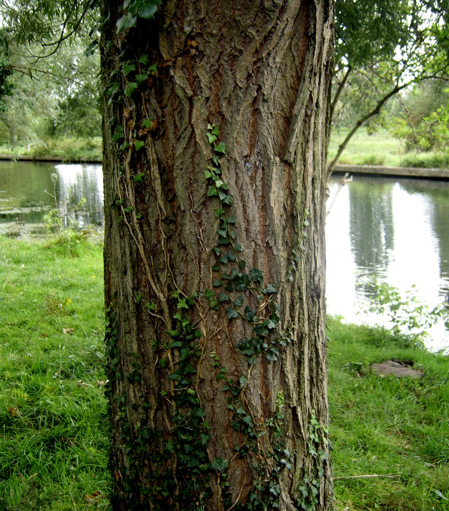 tree trunk tree trunk by the river james bowe flickr