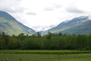 Upper Field w/ Mt Chaval in Background | by Cascadian Farm