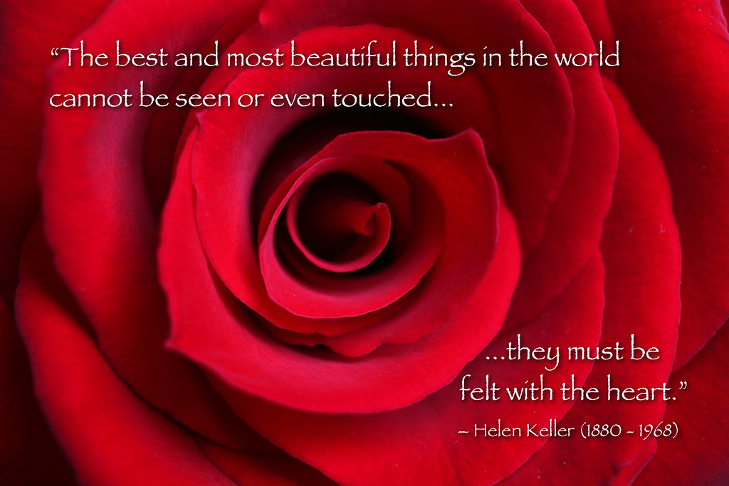 Red Rose Macro With Helen Keller Quote Red Rose Blossom Ma Flickr