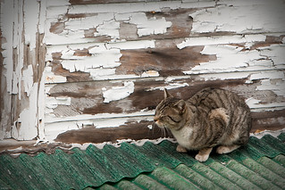 Cat on the Roof | by markguim