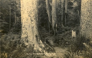 In the woods near Gearhart, Oregon | by OSU Special Collections & Archives : Commons