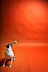 balls | by smalldogs